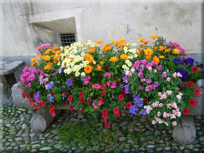 Sfondi per desktop i fiori sfondo 024 for Immagini per desktop fiori