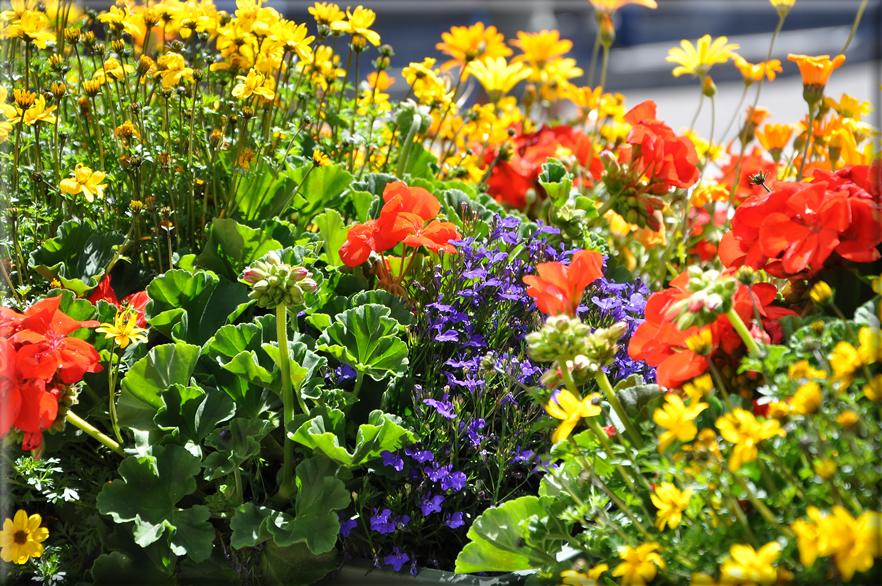 Sfondi per desktop i fiori sfondo 020 for Immagini per desktop fiori