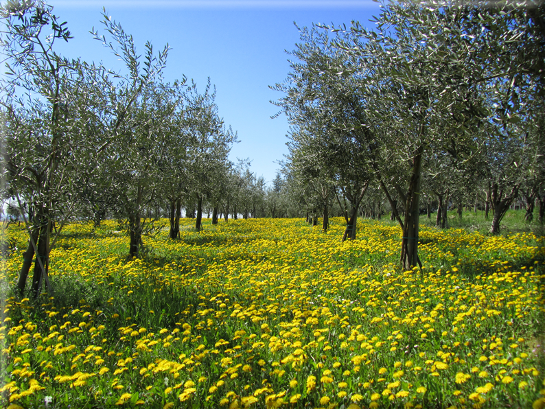 Pin primavera paesaggi hd wallpaper foto sfondi per for Immagini primavera desktop