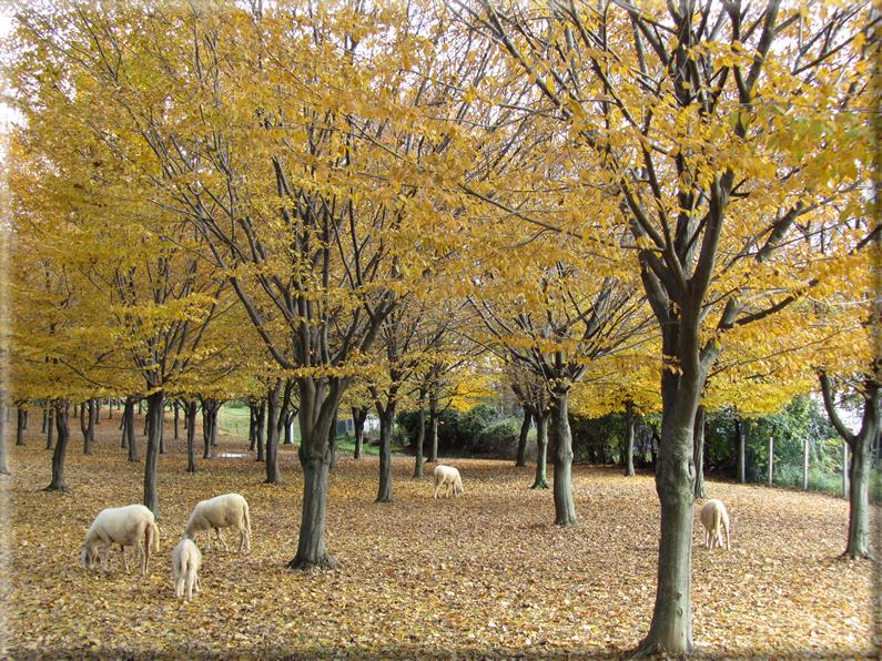 Sfondi per desktop paesaggi autunnali sfondo 017 for Foto per desktop gratis autunno
