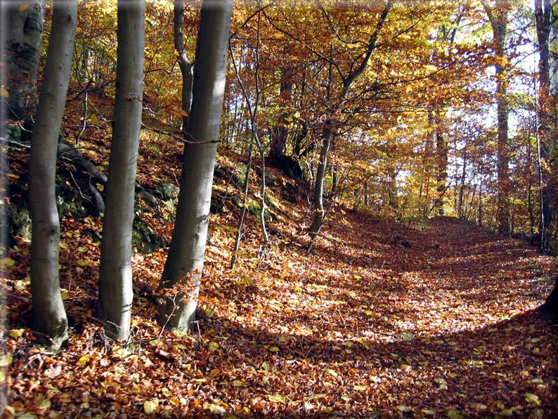 Sfondi per desktop paesaggi autunnali sfondo 007 for Foto per desktop gratis autunno