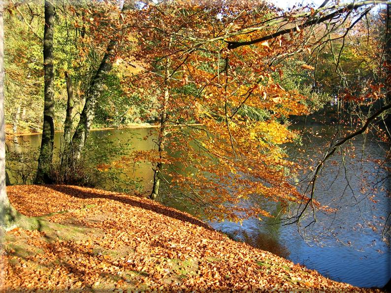 Sfondi per desktop paesaggi autunnali sfondo 009 for Foto per desktop gratis autunno