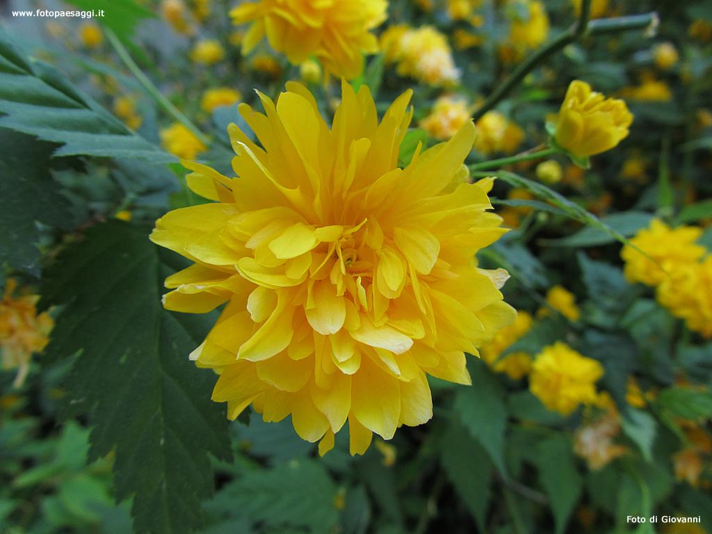 Sfondi per desktop i fiori sfondo 013 for Sfondi desktop fiori