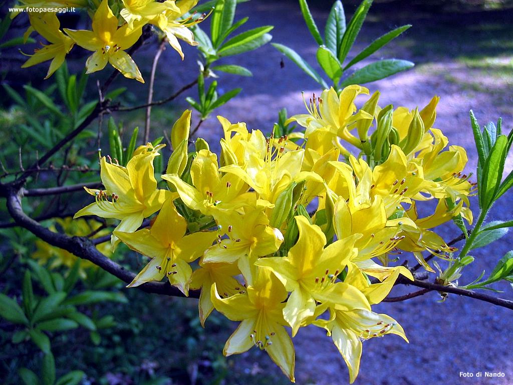 Sfondi per desktop i fiori sfondo 035 for Sfondi desktop fiori