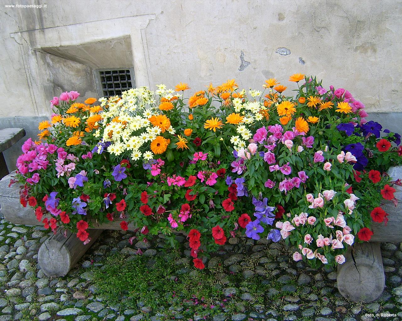 Sfondi per desktop i fiori sfondo 024 for Sfondi desktop fiori