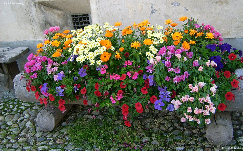 Sfondi per desktop i fiori sfondo 024 for Immagini farfalle per desktop